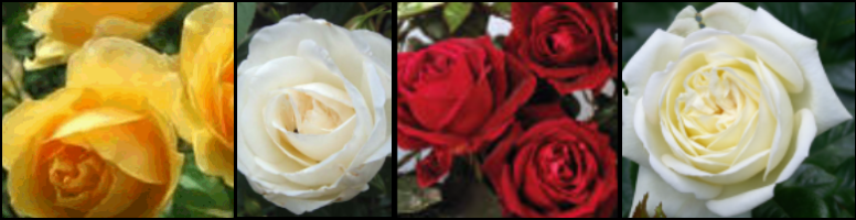 Golden, Ruby, Diamond, Silver Anniversary Roses - You choose
